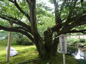 16-07-2013-Japão (3)