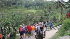 Bali_Plantação de arroz