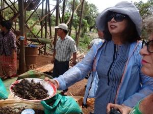 Camboja_Siem Reap_Captura de grilos