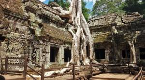 Camboja_Ta Prohm