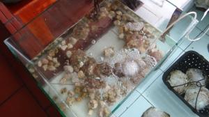 Halong Pearl