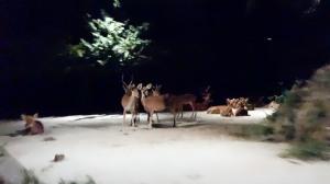Singapura  _Safari Noturno