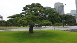 05-06-2016_tokyo_palacio-imperial_04