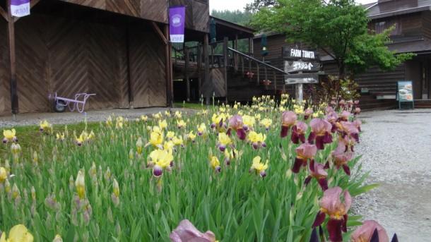 09-06-2016_tomita-farm_001