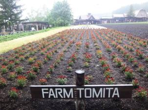 09-06-2016_tomita-farm_002
