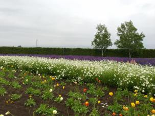 09-06-2016_tomita-farm_006