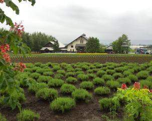 09-06-2016_tomita-farm_007