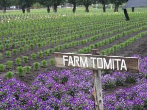09-06-2016_tomita-farm_02