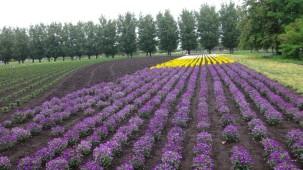09-06-2016_tomita-farm_04