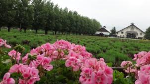 09-06-2016_tomita-farm_05