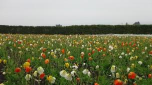 09-06-2016_tomita-farm_07
