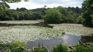 15-06-2016_kyoto-ryoanji-temple_03