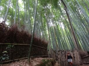 15-06-2016_kyoto_bamboo-grove_06-regina