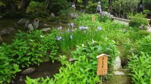 15-06-2016_kyoto_tenryu-ji-zen-temple_30