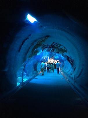 19-06-2016_dubai-aquario