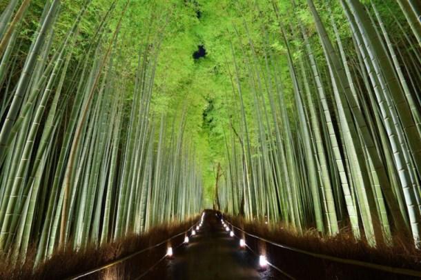 bamboo-grove_01