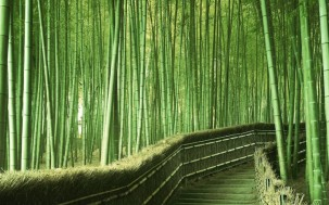 bamboo-grove_02